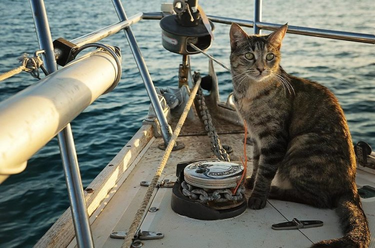 Cat sailor
