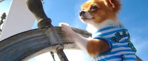 puppy sailing