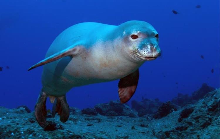 Adriatic seal