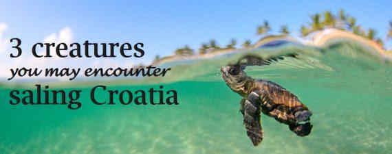 croatian aquatic wildlife
